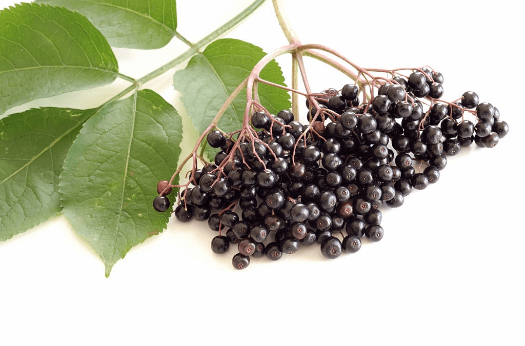 Elderberry Syrup For Kids